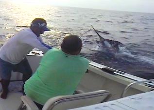 500 lb Marlin Jump