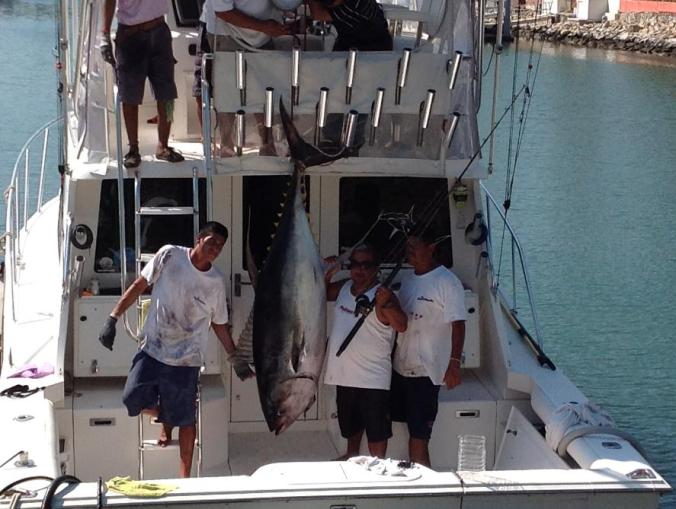 captain_Steve_Torres big Tuna yelowfin Puerto Vallarta fishing charters mymarlin